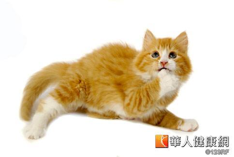潘訓生獸醫師表示,貓咪若因飼料的維他命B1含量不足而生病,除透過醫師治療之外,平日也可以小包裝、不同品牌輪流餵食的方式,降低營養不均所帶來的健康風險。