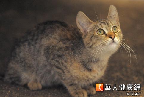 壁纸 动物 猫 猫咪 小猫 桌面 484_324