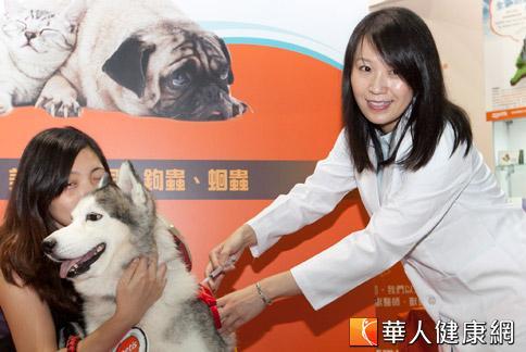 駱虹霏醫師示範為狗狗注射疫苗。(攝影/黃志文)