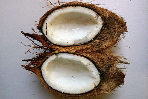 從椰子提煉的椰子油,所含的單元不飽和脂肪酸量低,大量攝取有害心血管健康。(圖片/取材自維基百科)