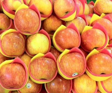 愛荷華大學研究團隊的研究發現,蘋果皮中富含的熊果酸,可以增加肌肉及棕色脂肪量。