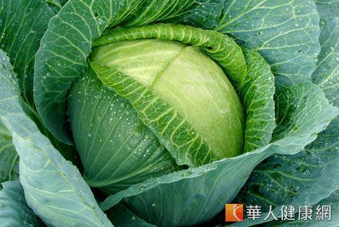 甘藍菜就是俗稱的高麗菜,營養價值豐富,有「菜 ...