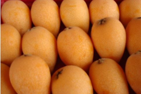 枇杷又稱黃金果,性涼味甘,具有「潤肺止咳、疏肝理氣」功效。(圖片提供/農委會農糧署)