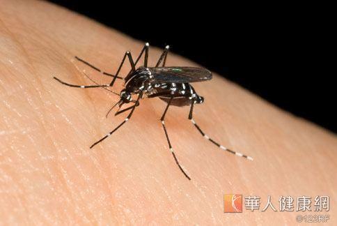 世界衛生組織訂定的「世界健康日」,將蚊蟲叮咬疾病列為健康首害。