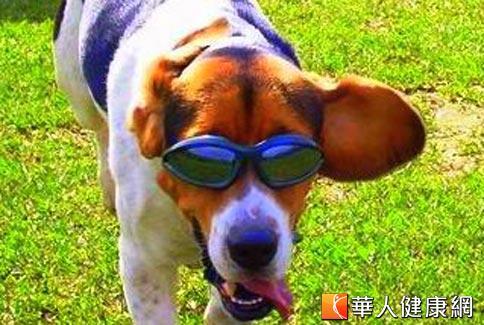 人道考量!美动物实验需符合动物福利法