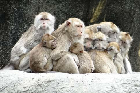 (图片提供/台北市立动物园)